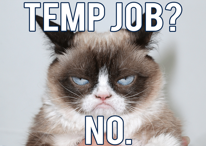 grumpy cat temp job