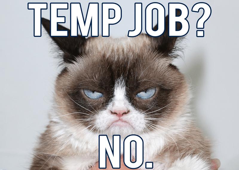 grumpy cat temp job