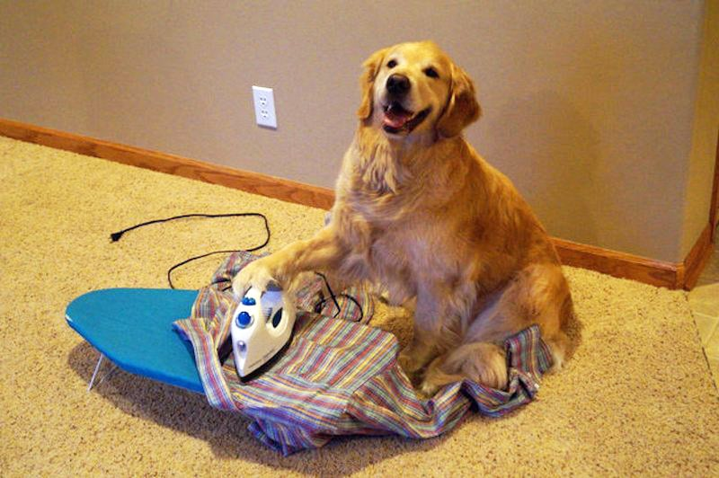 bring your dog to work sarasota